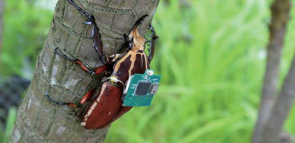 Robots with Life: Cyborg Bugs
