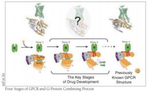 SKKU Professor Chung Ka-Young's Breakthrough GPCR Research